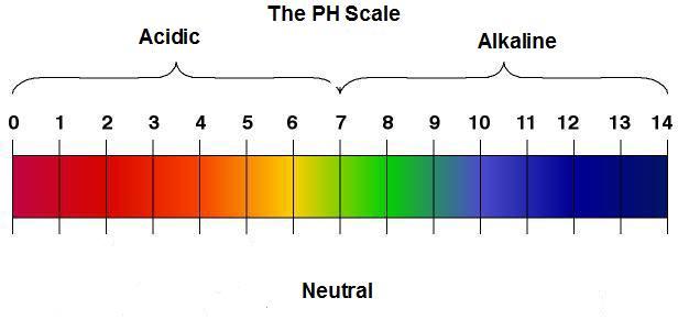 alkaline-alkalinity