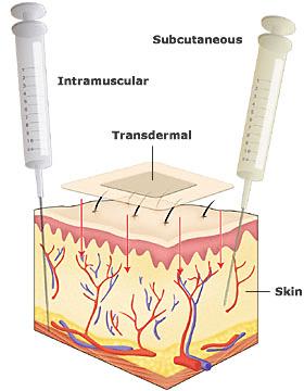 transdermal-skin