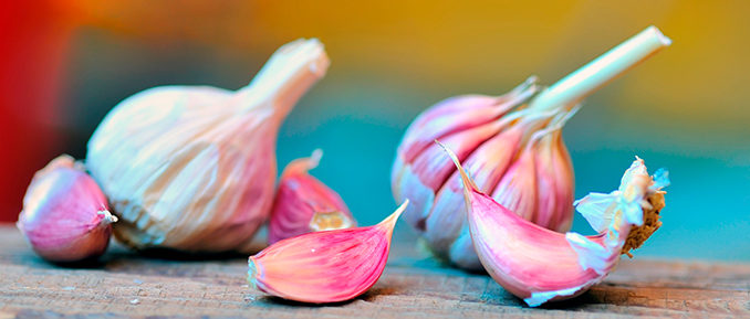 Garlic-epigenetics-678x289