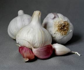 garlic_sulfur