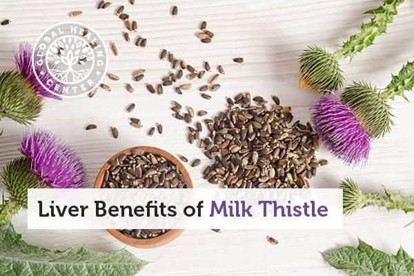 liver-benefits-of-milk-thistle