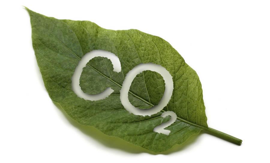 Carbon-dioxide-leaf_compressed