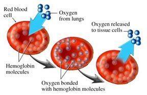 hemoglobin-oxygen