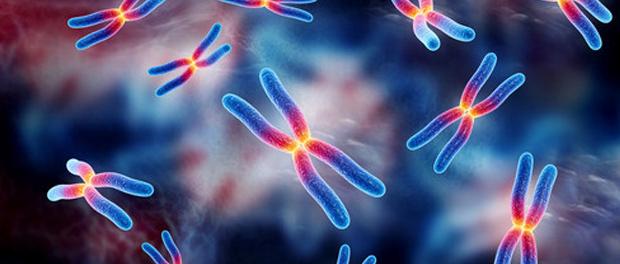 chromosome-inheritance