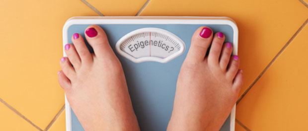 epigenetics-obesity-plastic