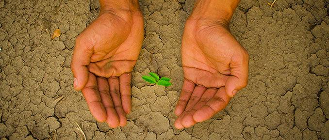 drought-epigenetics-678x289