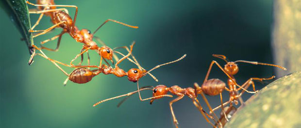 ants-dna-methylation-epigen