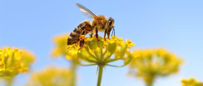 honeybee-epigenetics-678x289
