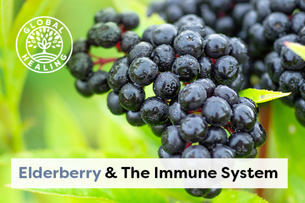 elderberry-and-the-immune-system
