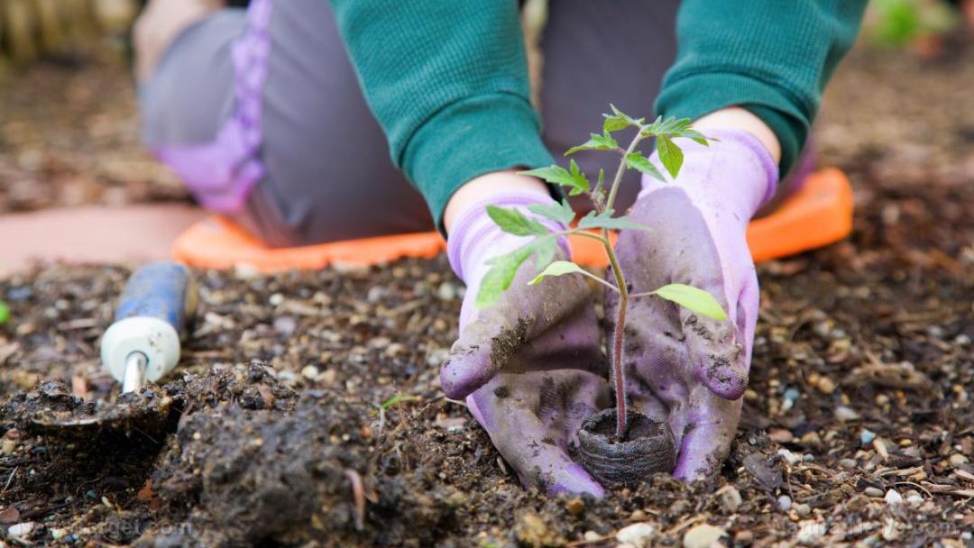 Garden-Spring-Vegetable-Plant-Organic-Work-Person