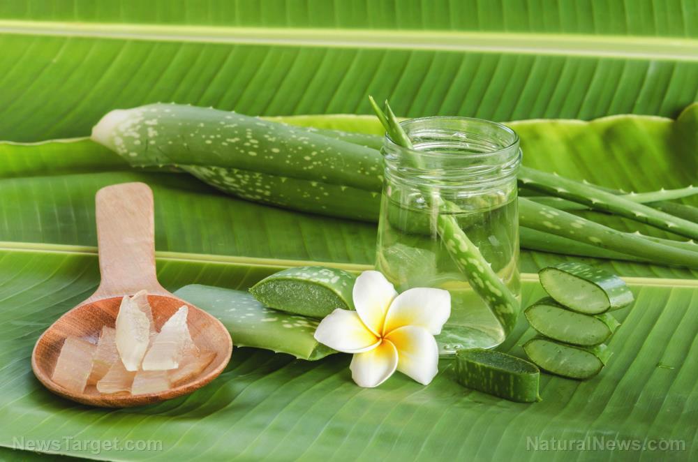 Vera-Acne-Beauty-Sunburn-Vitamins-Aloe-Alternative