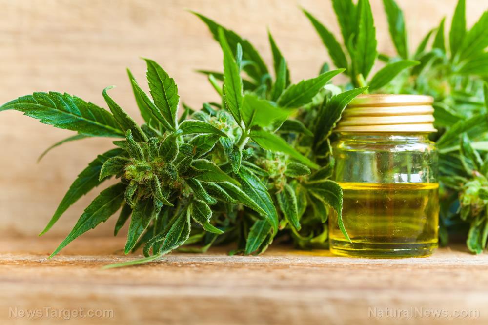 Cbd-Oil-Cannabis-Cannabidiol-Hemp-Medical-Marijuana
