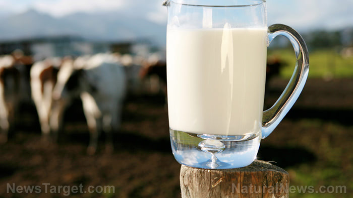 Raw-Milk-Pitcher-Cows