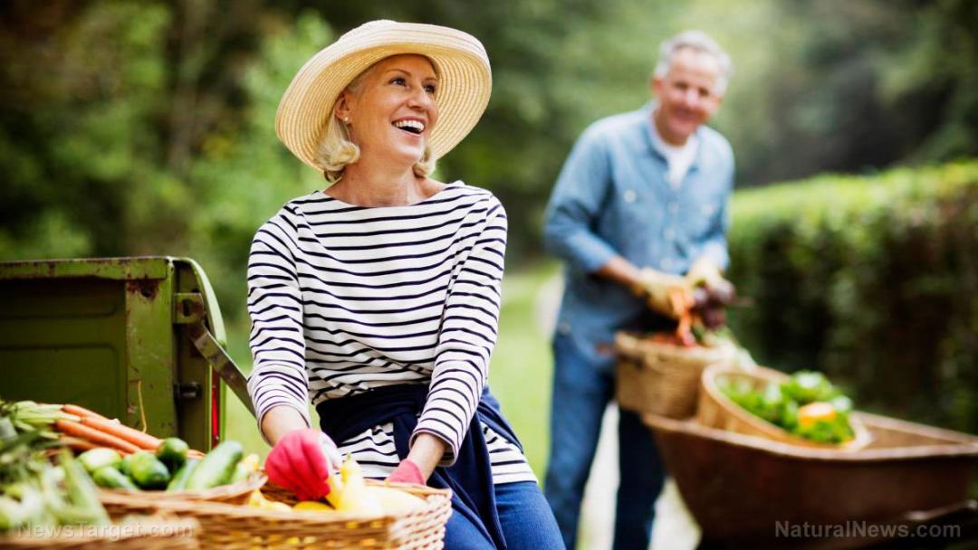 Senior-Elderly-Harvest-Garden-Produce