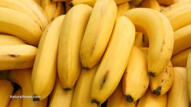 Yellow-Bananas-Bunch