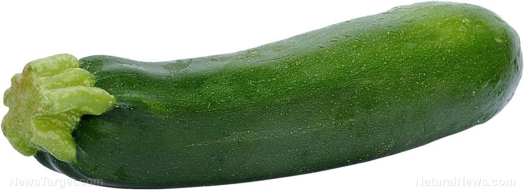 Zucchini-Italian-Squash-Vegetable-Green-1