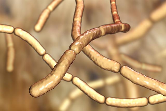 Antibiotics-bacteria-fungicides-2