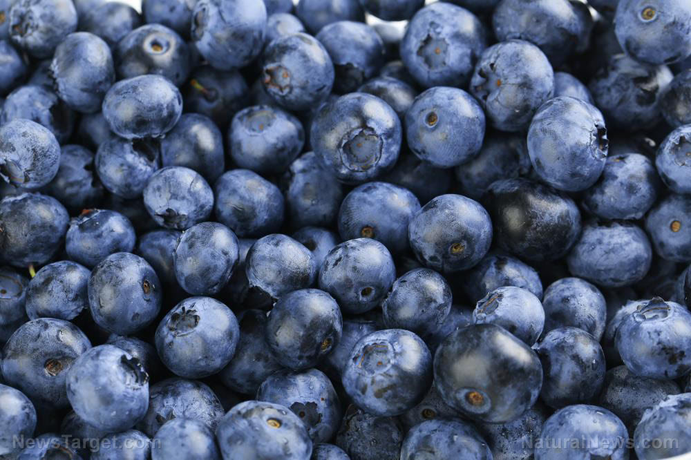 Antioxidant-Background-Beautiful-Berry-Blue-Blueberry-Close