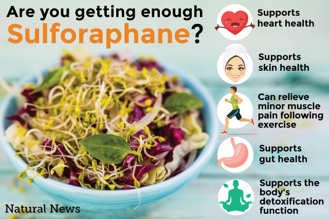 Are-you-getting-enough-of-Sulforaphane