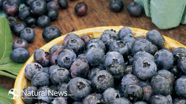 Blueberries-Wooden-Bowl-650X433