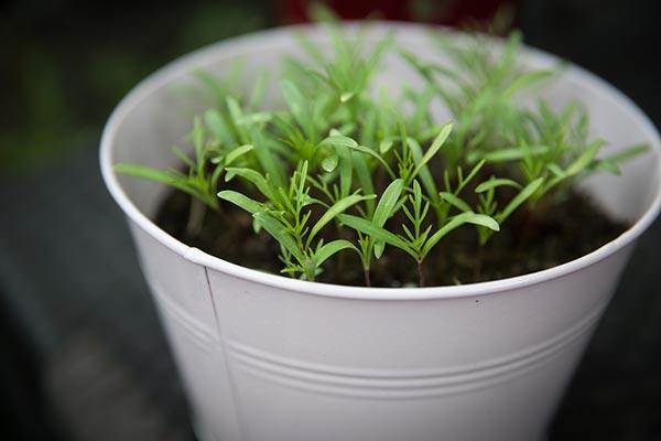 bucket-container-gardening-homesteading