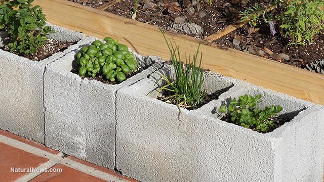 Cinder-Block-Urban-Garden-Herbs