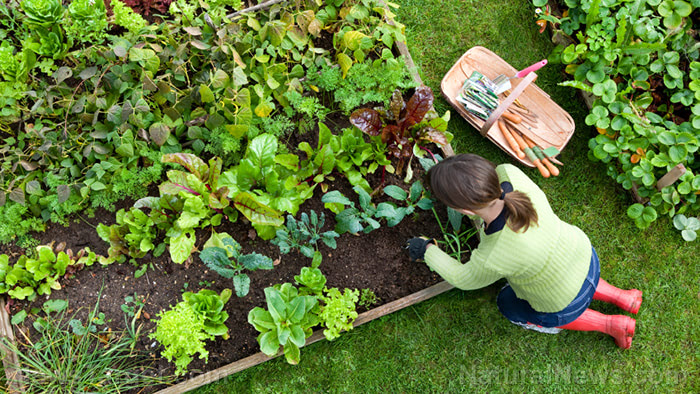 Girl-Plants-Vegetable-Garden