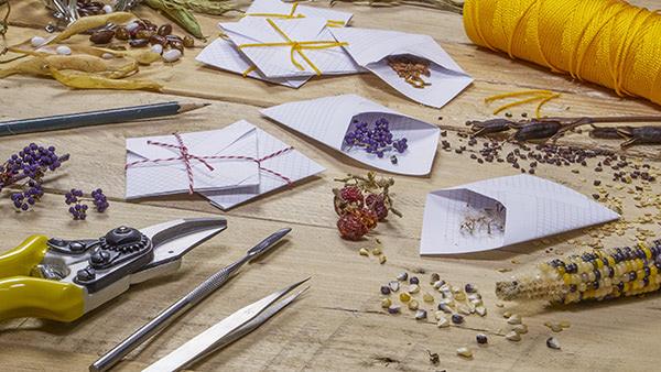heirloom-seeds-gardening-homesteading-prepping