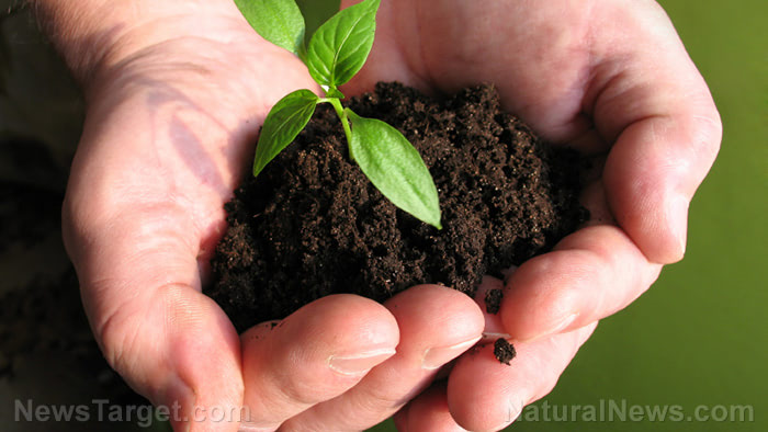 Plant-Seedling-Hands-Soil