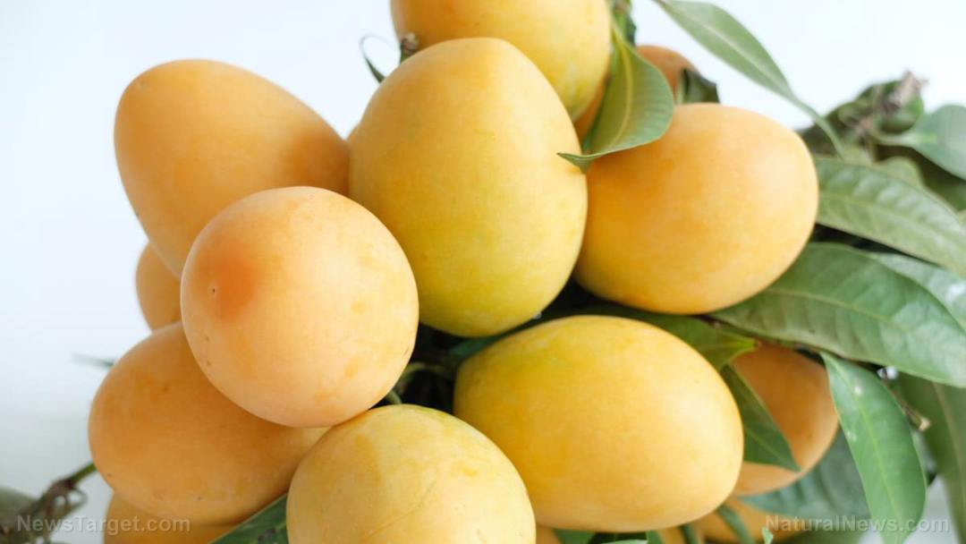 Plum-Mango-Fresh-01
