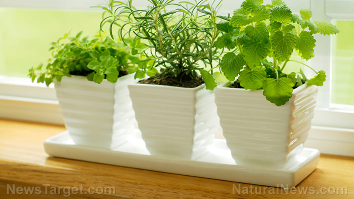 Potted-Plants-Window-Home-Garden-Leaves