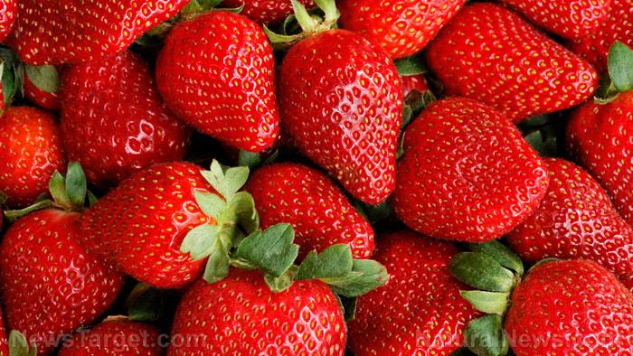 Red-Strawberries-Bunch-Harvest-Fruit