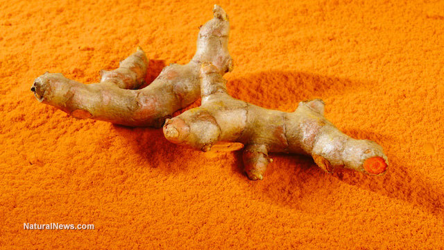 Turmeric-Powder-Root