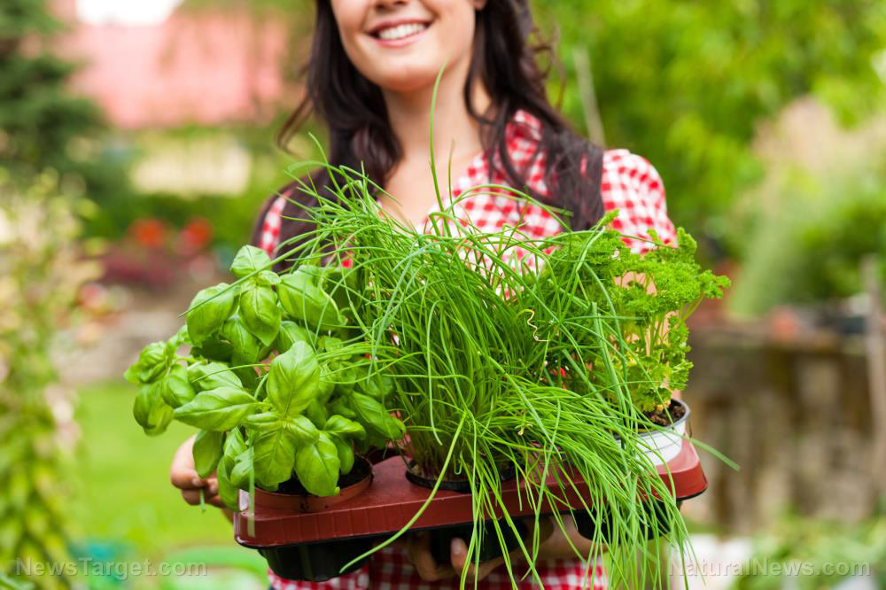 Woman-Close-Up-Herbs-Garden-Basket
