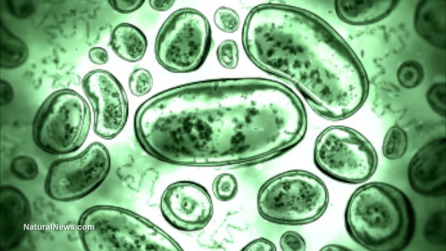 The conventional germ theory for disease - How It interferes with our health
