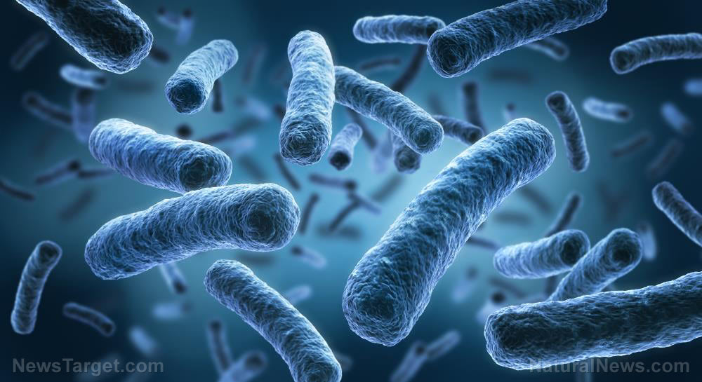 The gut's role in food allergies: Scientists identify changes in gut microbiota that may prevent or even reverse food allergies