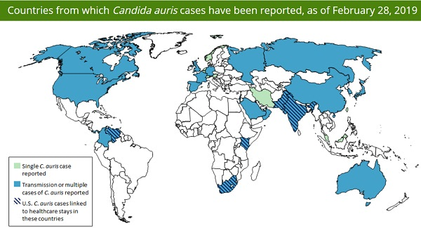 Countries from which Candida auris have been reported