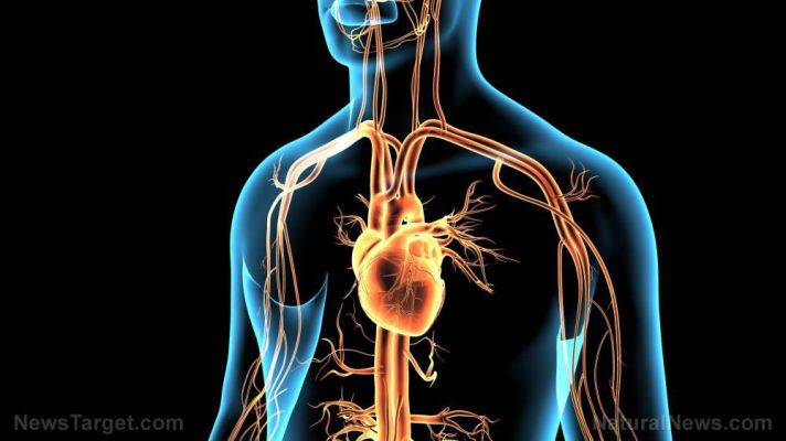 Can heart enlargement predict coronavirus deaths?