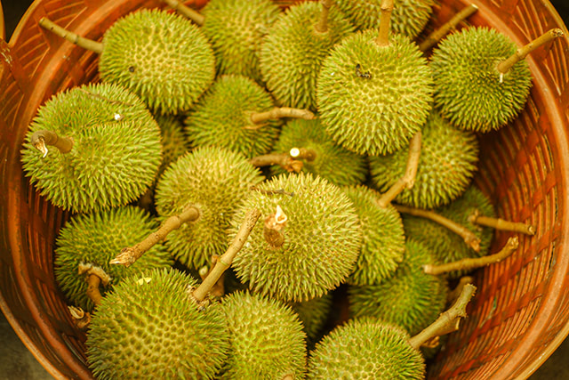 """The odd durian """"superfruit"""" requires bats for pollination"""