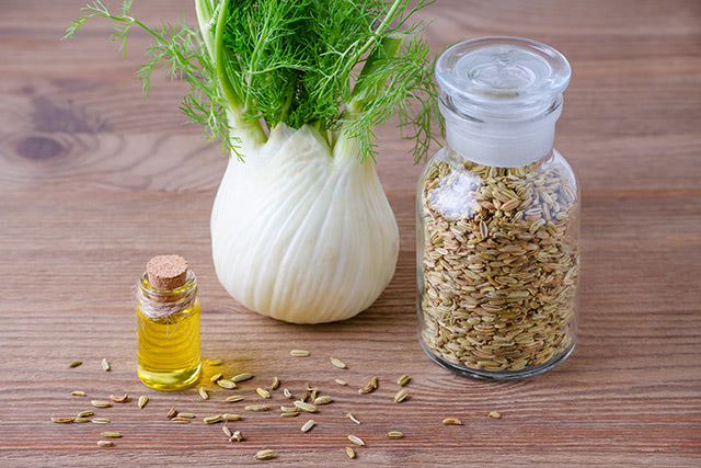 Fennel oil found to have antifungal activity against Candida albicans