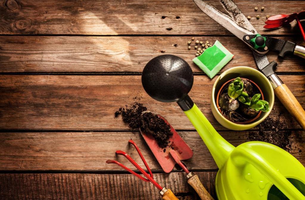 Medicinal plants: 15 Must-have herbs in your survival garden