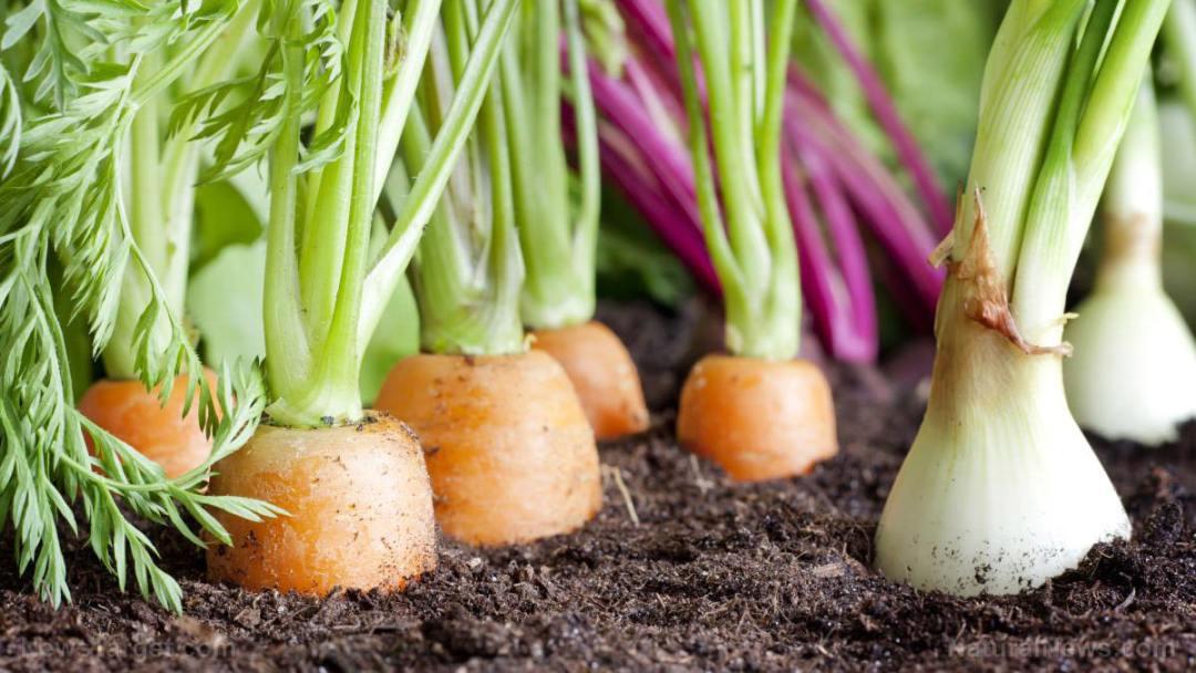 Many-Fresh-Organic-Vegetables-Growing-Garden