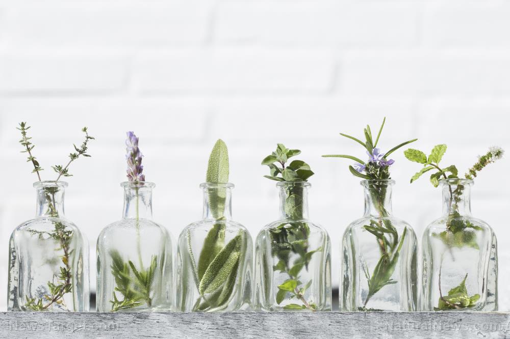 Activity of Melaleuca, Cymbopogon, Cinnamomum and Thymus essential oils against pathogenic fungi
