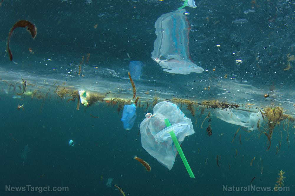 All our bodies are filled with plastic