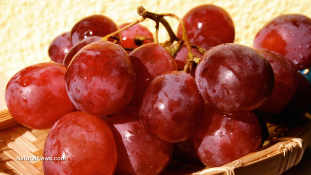 Piceatannol aids weight management, helps prevent obesity, found in red grapes and wine