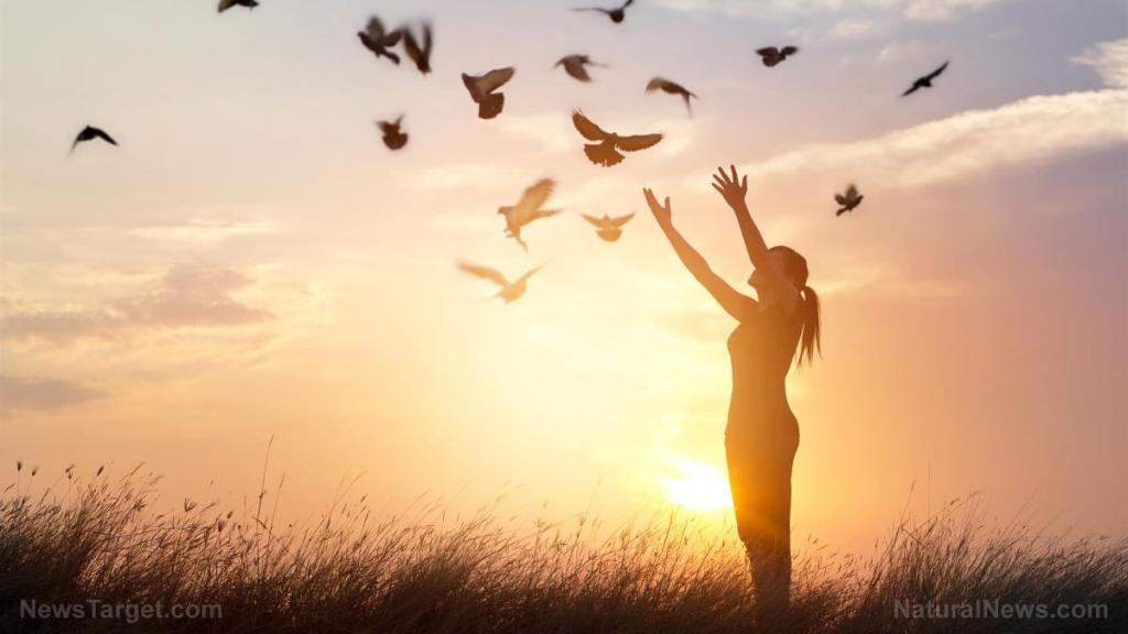 Nature shows us how important circadian rhythm is to our overall well-being