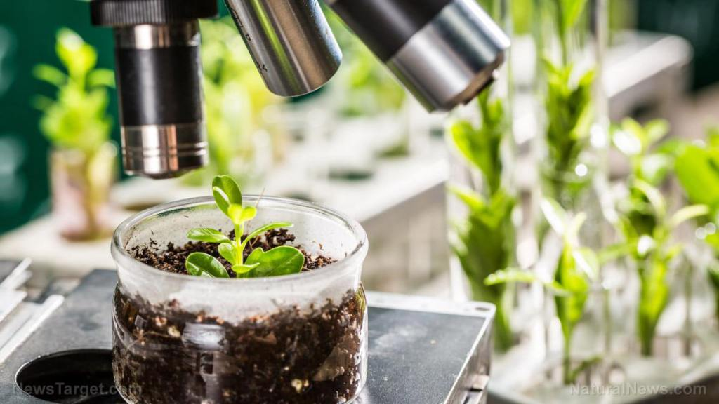How do bacteria populations travel through soil layers?