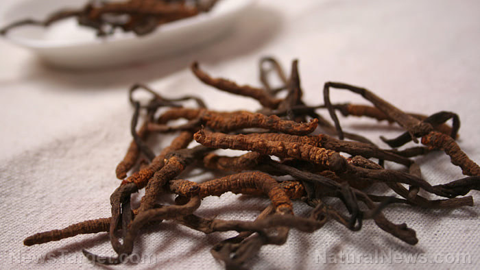 Cordyceps: A strange fungi packed with a lot of health benefits