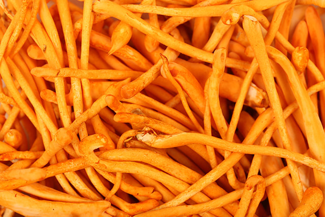 Eat cordyceps before high-intensity exercise to improve endurance