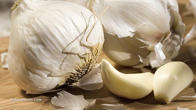 Use Garlic Instead of Antibiotics